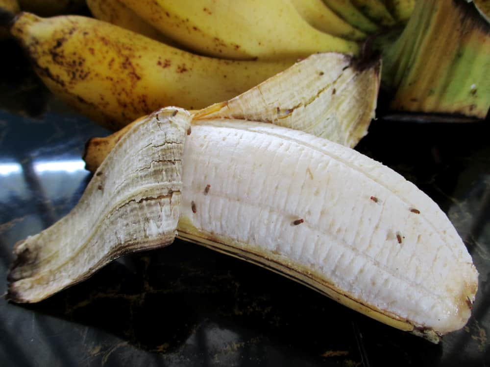 Drosophila on ripe banana