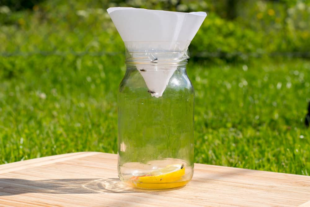 fruit and small flies trap