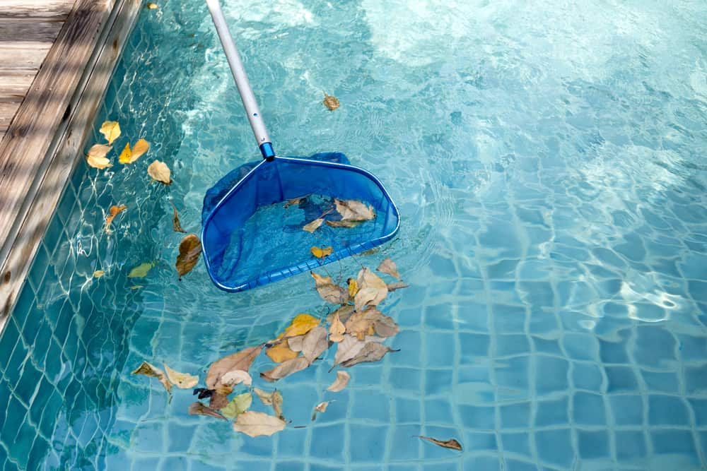 removing leaves from a pool
